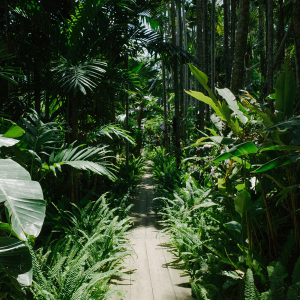 Palmwood Tropicals Shaded Plants